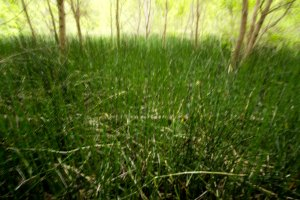 Snake Grass Fields, Sarah Farr Out Fine Art Photography